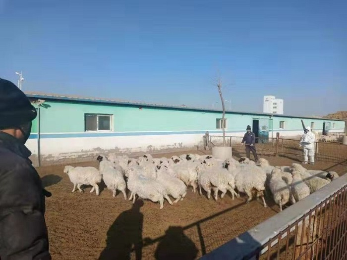 自治区畜牧站开展畜禽遗传资源普查工作专项技术指导